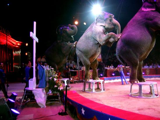 Gärtner´s Elefanten waren Teil des diesjährigen Ökumenichen Gottesdienstes in Monte Carlo - Big mountain vor dem Kreuz